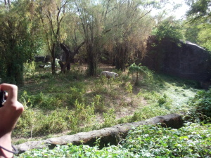 RajivGandhi Zoological Park