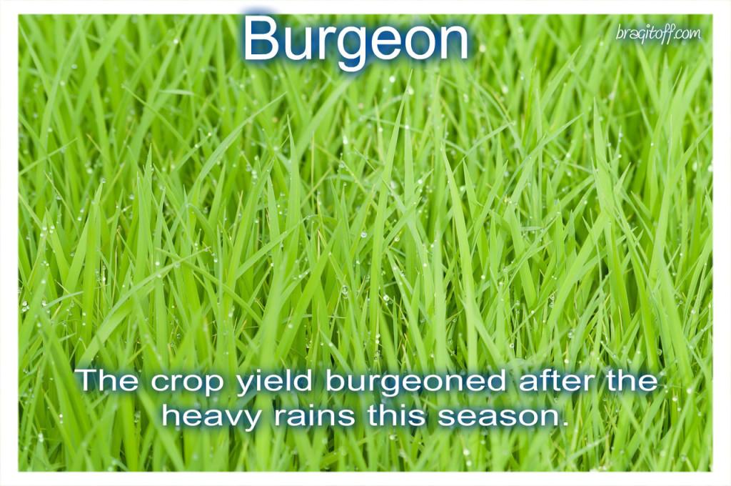 wet rice crops hd